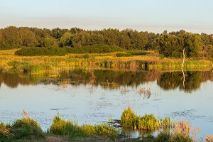 Evening summer lake panorama