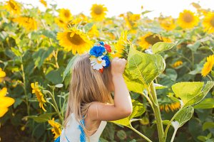The game of hide and seek on the sunflower field