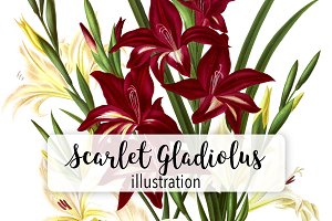 Florals: White and Scarlet Gladiolus
