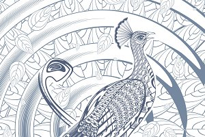 Sketch Beautiful Peacock Template