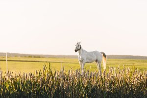 Lonely white horse standing on the green field with flowers