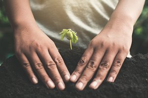 hand planting little green sprout