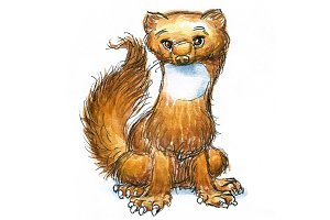 Watercolor marten