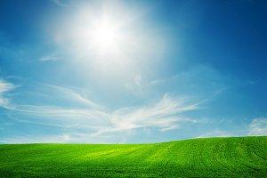 Spring field landscape