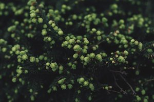 Nice green bush