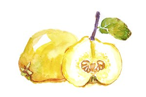 Watercolor quince
