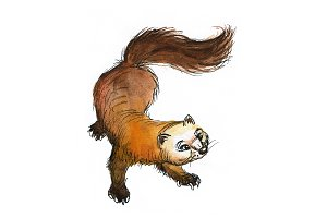 Watercolor marten 1
