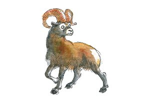 Watercolor Marco Polo sheep