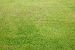 grass pattern textured background