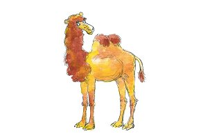 Watercolor camel character