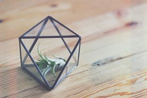 Air Plant Inside Geo Planter