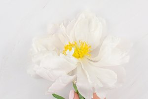 White peony flowers on marble