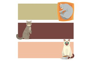 Different cat banners cards cute kitty pet cartoon cute animal cattish character set catlike illustration