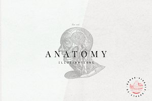 Anatomy illustrations
