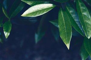 Leaves background. Defocused green backdrop