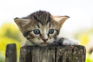 kitten on the fence