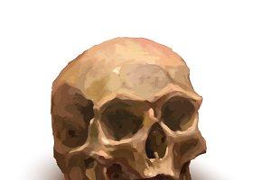 Ancient realistic human skull