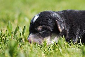 Newborn puppy in the grass. Portrait of a little puppy