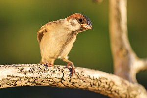 sparrow on a branch with runes in the sunset