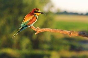lovely bird is illuminated by the warm summer sun