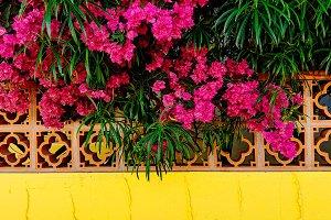Tropical flowers. Canary island.