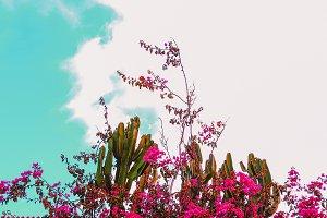Tropical location. Tropical plant. C
