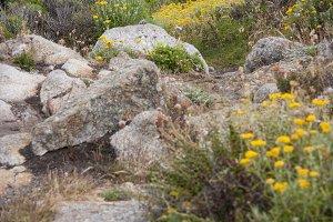 Colorful Nature Trail (Photo)