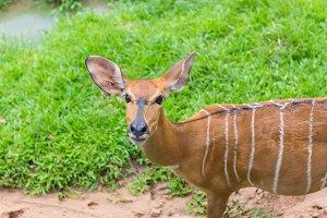 deer on green grass in the garden.