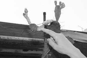 Hand in a Cactus in Black and White