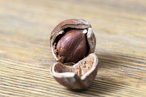 cracked nut hazelnut