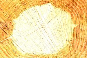 Tree stump tree rings