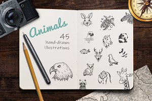 Hand Drawn Illustrations -Animals-