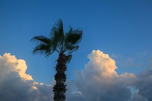 Palm tree against the beautiful blue sky with clouds.