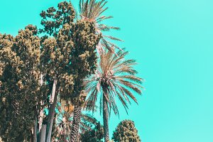palm trees and turquoise sky.