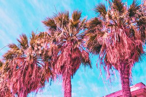 Palm trees and hotel in pink
