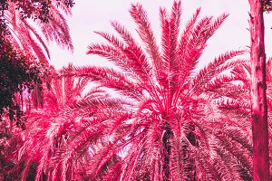 Palm trees and plants in pink.