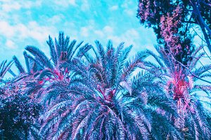 Palm trees and plants in purple