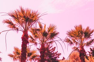Orange palm trees on pink sky