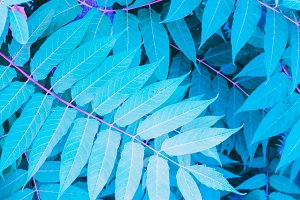 Pattern of turquoise leaves