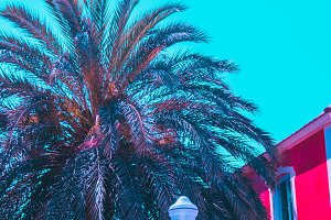 Palm and hotel. bright colors