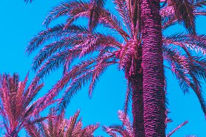 Pink palm trees against the sky