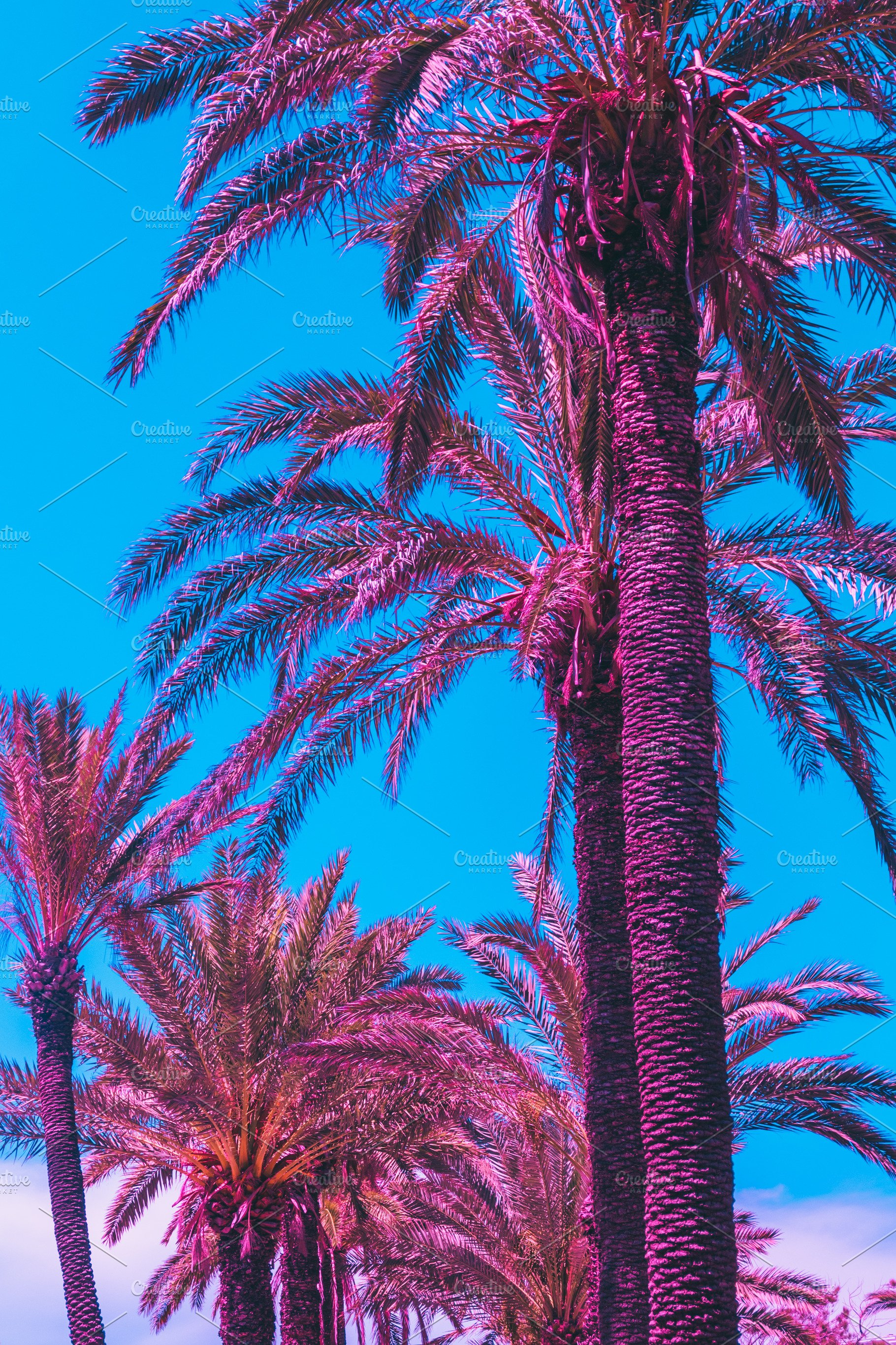 Pink Palm Trees Against The Sky High Quality Nature Stock Photos