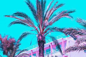Pink palm trees and pink hotel