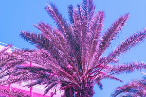 Palm trees, hotel, blue sky