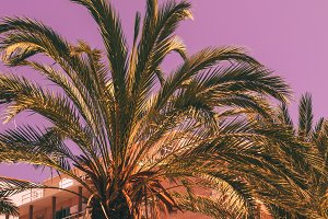 Palms, hotel against the purple sky
