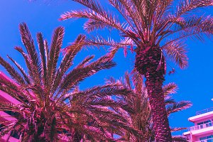 Palms, hotel, deep blue sky
