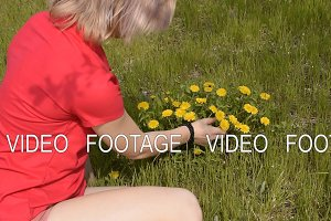 Beautiful blond girl tears dandelion flowers. Spring flowering dandelion