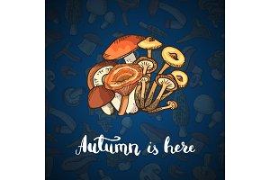 Vector hand drawn mushrooms background illustration