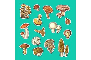 Vector hand drawn mushrooms stickers set illustration