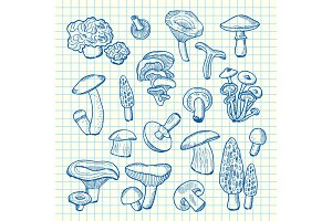 Vector hand drawn mushrooms on cell sheet illustration
